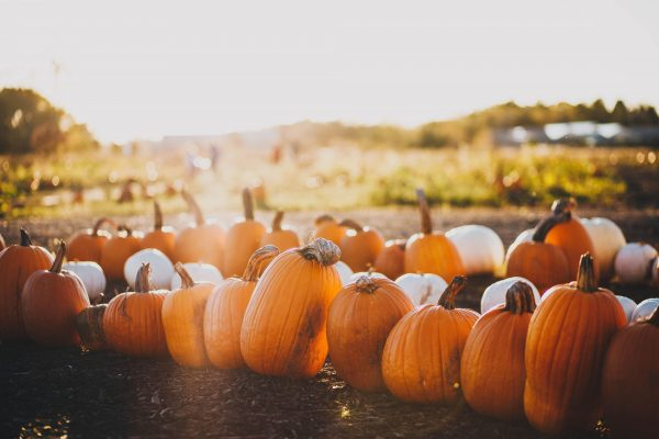 The Best Part of Autumn – Pumpkin Season!